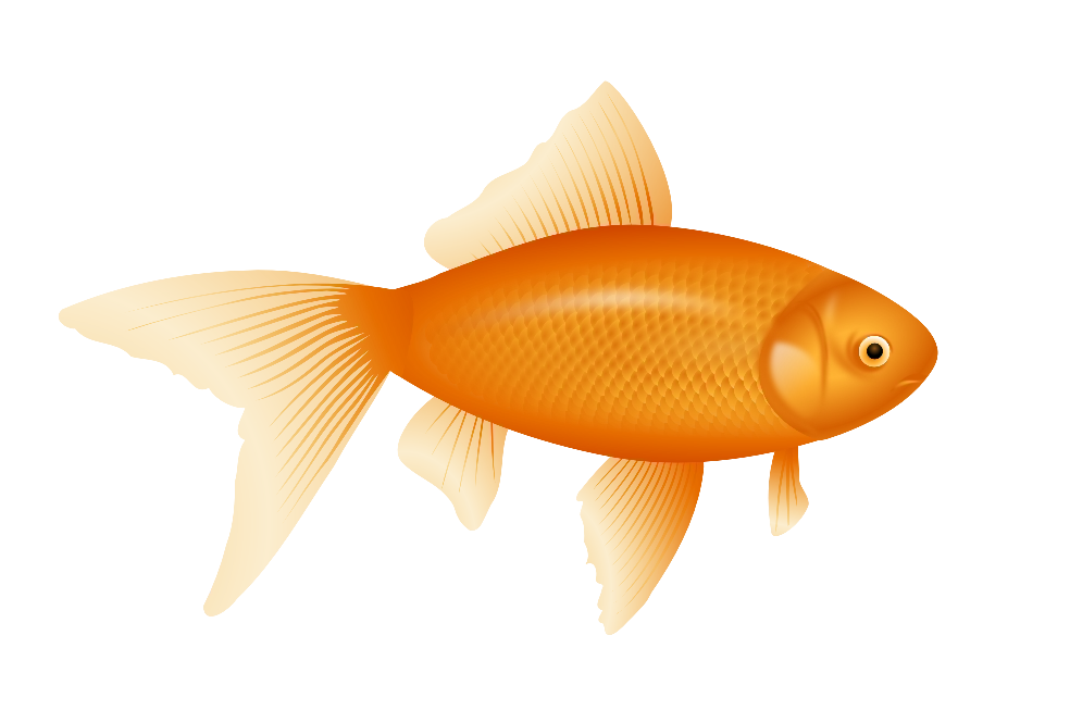 Example image of a fish